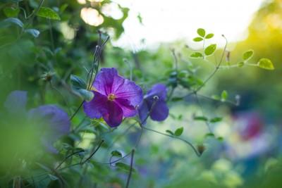 Цветы в лагере Альбатрос