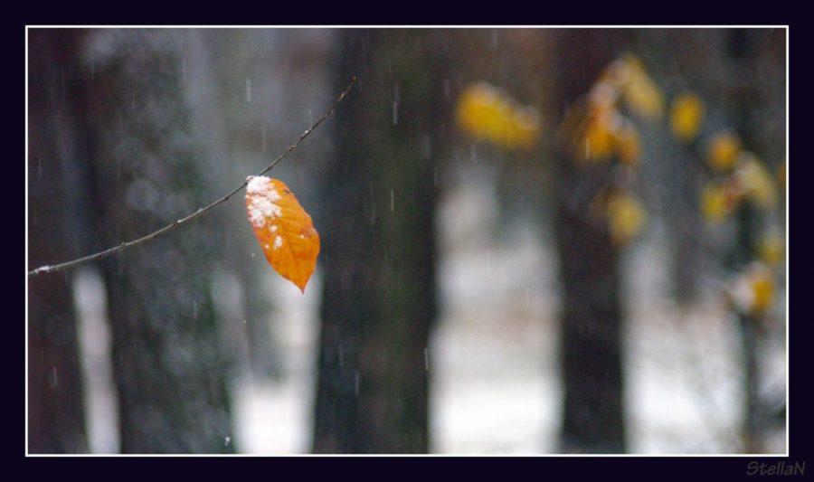 10380436_370057253155149_2226254426022696208_oсезон «Сяосюэ» - «Малые снега» 小雪.