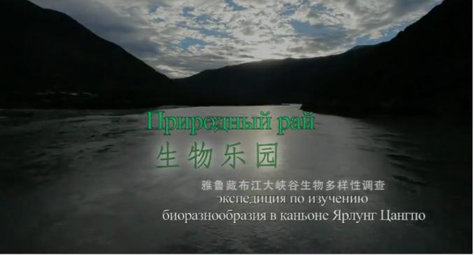 фотограф, природа, красота, Китай, живая природа, дикая, уникальные животные