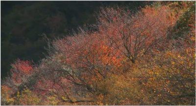 природа, фотографы, Китай, живая природа