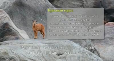 редкие животные, уникальные, фотограф