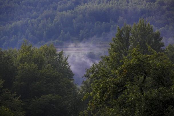 Горы и Лес в Закарпатье, где регулярно проходят летние семинары с Му Юйчунем